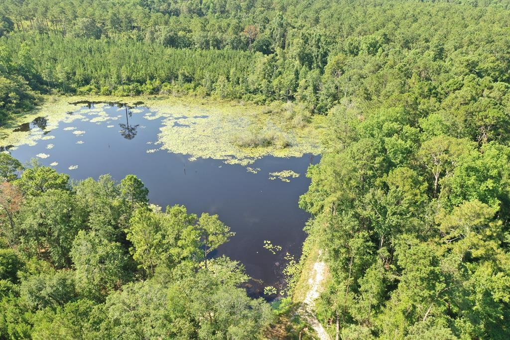 Private Setting, Shared Black Water Pond (Seller says additional land might can be purchased in future.)  Thick woods, Trails, Deer, Turkey, etc.  Lots of critters and lots to explore!  That pond is a wonder land of adventure and just what the kids need or adults for that matter.  Some of my best memories have been from adventures had around ponds!  This is a good looking one.  Stocked with Carp and Bream....the owner has even limed this pond!    This is a Bass Hole for sure!  Surrounded by wooded tracts  this little 11 acres will keep you entertained with wildlife.  Good soils in the front and back suitable for home sites or for making more feed plots.  This pond has been here for a while.  Get a quote on what it would cost to build a similar pond and try to get a guarantee that it will hold water and what that will cost you.    If you could pic up that additional land and push you another winding driveway back to this pond.....you could really have you something extra special.