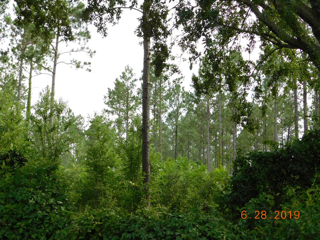 Looking for some acreage to build your new home. This is a perfect spot. Acreage consists of planted pines, thinned twice.
