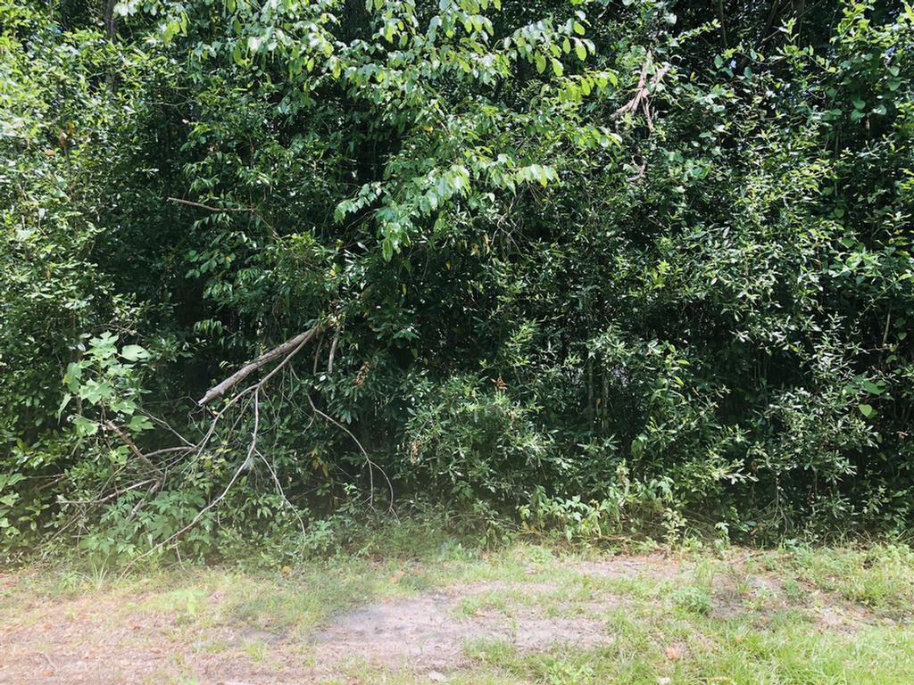 Great investment piece, you could use this lot to build  potential rental homes.