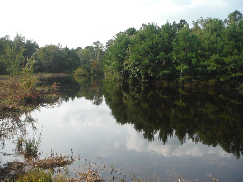 GREAT HUNTING TRACT. IDEAL FOR HORSES. Perfect location to put your home overlooking the ponds. This  65 Acres Tract is very great for Hunting and Fishing and Trail Riding . Property has Several Thousand Dollars of Timber ready to be Cut. ENJOY THE (3) Stocked Ponds for Fishing and or set up a Duck Pond. Great amount of various wildlife such as Turkey and Deer Hunting. Lots and Lots of Trails on the property. Also Road Access mostly all around 2/3 rd of the property to drive you truck or vehicles on. LOCATED JUST OFF PAVO ROAD AND ABOUT (6) MILES FROM COUNTRY OAKS GOLF COURSE. Seller/Owner/Agent . CALL NOW FOR AN APPOINTMENT TO SEE THIS BEAUTIFUL PROPERTY.