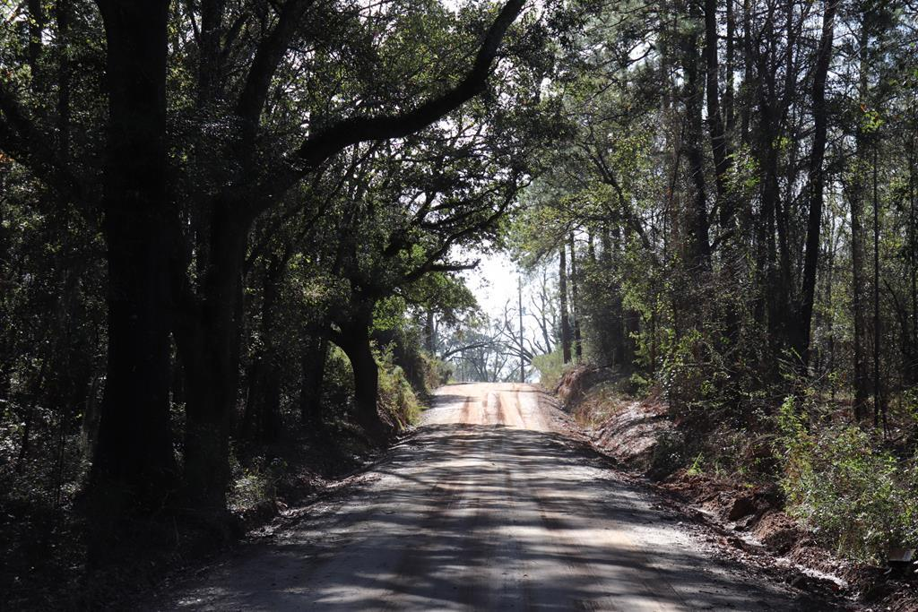 Good looking wooded property. In process of having fire breaks placed on property for easy viewing and for future controlled burning.  Good seed trees on property.  Good looking roll to  property.  Excellent tract to do a controlled burn on ans set up for home sites. On this tract you could do 2 acre minimum splits as long you had 150' of road frontage...with driveway approval from county road dept on Millpond and DOT on GA 3.  This is a great site to divide.  Even if you just wanted half of the property and sell of of the rest to fund your purchase ....it works!  Excellent Soil Map.  Good wildlife in the area.  Convenient to Hwy 19 Pelham, Camilla, and Thomasville.  Mobile Homes welcome.  Property is just down the road and across the street from Pinecrest Country Club offering a 9 Hole Golf Course playing over 3,425 yards.   This is a good little piece of land and a good investment if you figure on managing the property where you can divide out for home sites over time.