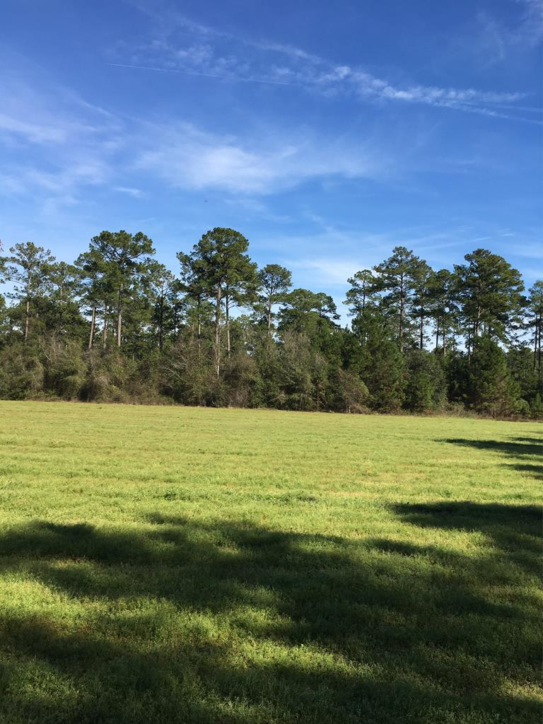 Great tract, close to town with lots of options. 14+/- acres in cultivation, good timber, lots of road frontage on US Hwy 319 N. Great for home site with hunting opportunities. Potential development tract.1,897 front feet on US Hwy 319 N. Seller would consider division in property.