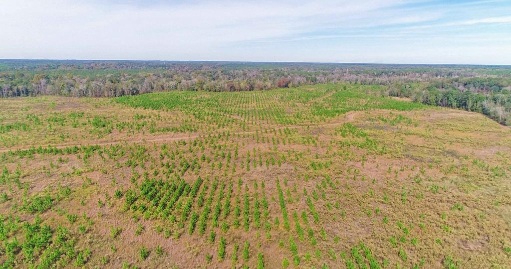 Pawnee Plantation consists of approx 1265 contiguous acres in Lee County, GA- the number two county in the state of Georgia for producing trophy class whitetail deer. It also has frontage on the famed Kinchafoonee Creek with its own private beach. Established road system throughout property. A portion of the property has been cleared and stumped and has been replanted with three year old planted pines, but would make for a good agricultural conversion. This property is surrounded by large agricultural land owners and has class one soils. Homesite with well and power in place.