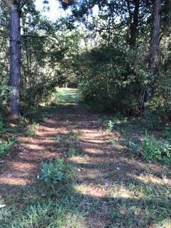 Big Bucks sited on this heavily wooded turn key hunting/recreational tract (see pics).  You will find a healthy rambling creek running through it and considerable timber value with healthy 25 year old planted pines.  Lots of paved road frontage gives the site lots of potential for development if desired.  Original fence marks property boundaries.  Additional 6 acres in cultivation and 1864 square foot Farm House/Hunting Lodge with well and septic tank included with full purchase price offer.  House is not adjacent to 72 acres.  South Mitchell County location.