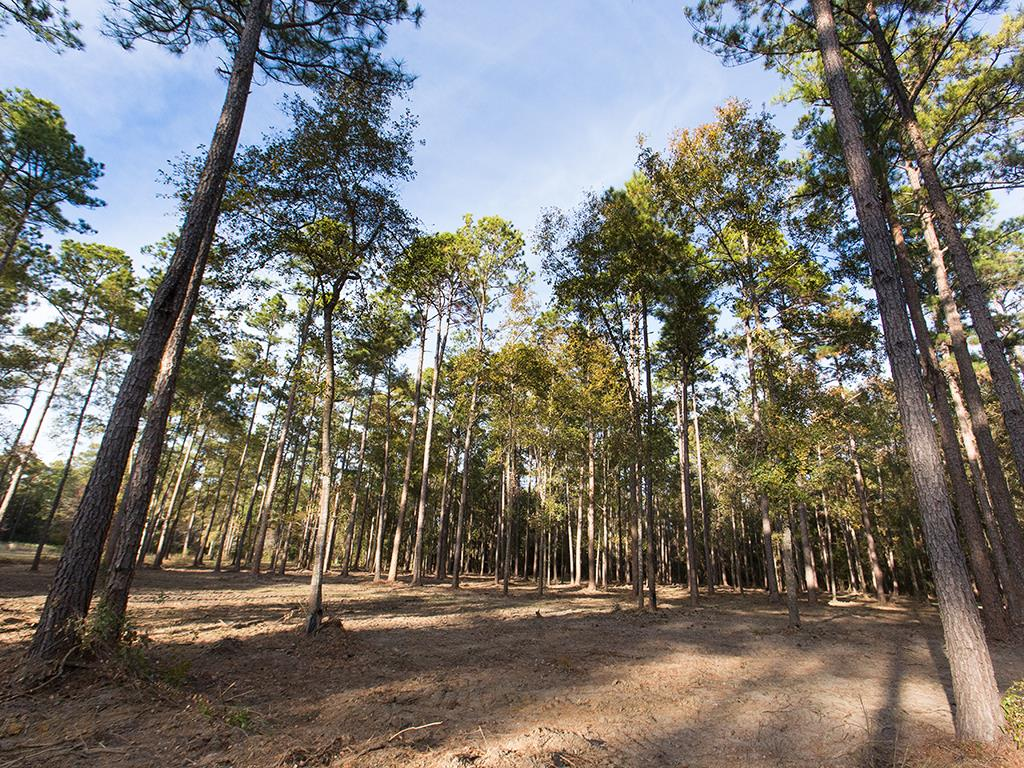 Rare opportunity to build your dream home in a highly desired location south of town! The Spring Lake neighborhood is only minutes from downtown Thomasville, Archbold Hospital and Glen Arven Country Club. This 4 acre wooded lot was recently mowed and is beautiful.