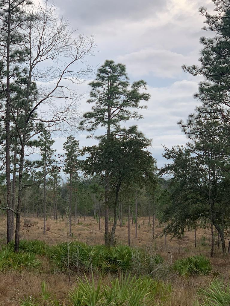 This 147 +/- acre north Thomas Co property is the perfect gentleman's farm.  If your into wiregrass, longleaf pines, and huge rolling hills with multiple possibilities for home or weekend cabin site, this is the property for you.  This land has been meticulously managed, and has been in the same family for over a 100 years.  It has abundant wildlife including deer, turkeys, and quail.  Established food plots with planted pines and a pond. Call office for more information.