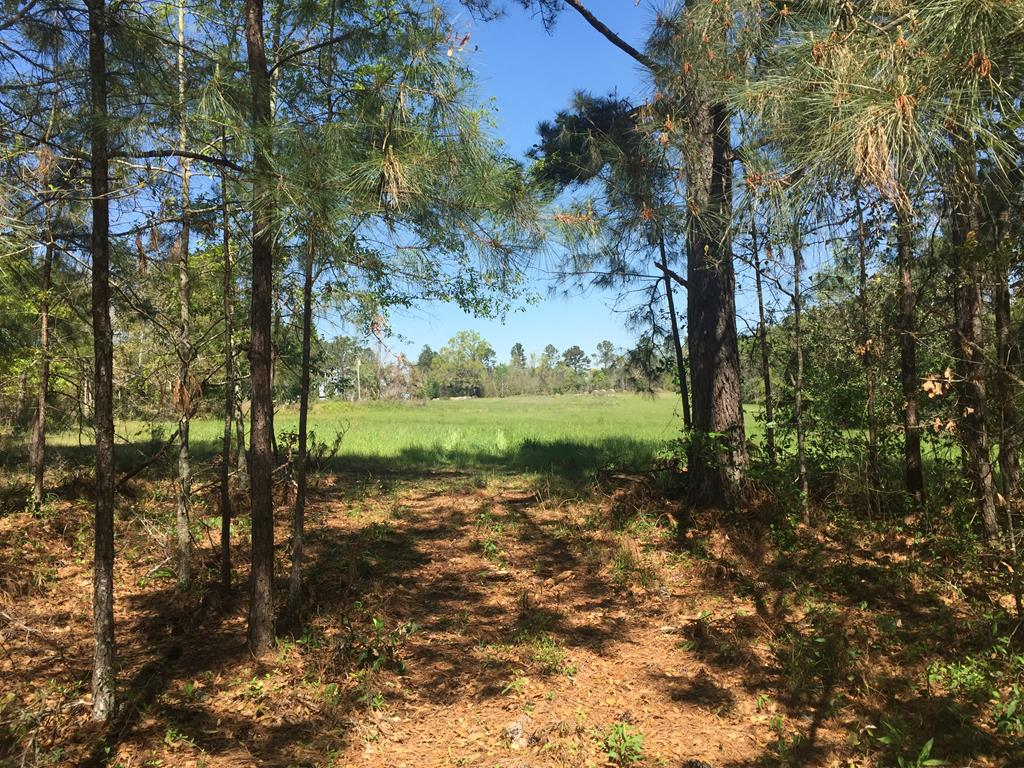 This is fun tract to look at....bring your boots or a mule.  Lot of mature loblolly, longleaf, and wiregrass.....super soil map.  Some pine regeneration already going on.  3 +/- Acres of field area.  Level to rolling topography.  Lots of deer and turkey sign.  Good looking hill top overlooking beaver pond.  Flowing high bank creek.  Strong mix of hardwoods including white oaks.  Property would look like finished quail woods with a few years of prescribed fire.  Easy to divide.    Lots of trails.    Good looking private home sites.  Over 3000' of road frontage. Farming Area.  Quick  drive from Thomasville and Bainbridge.  Perfect tract for released bird tract or to train dog.....just need to shape up the pines a little bit.   Good value when you consider how many options you have with this property.
