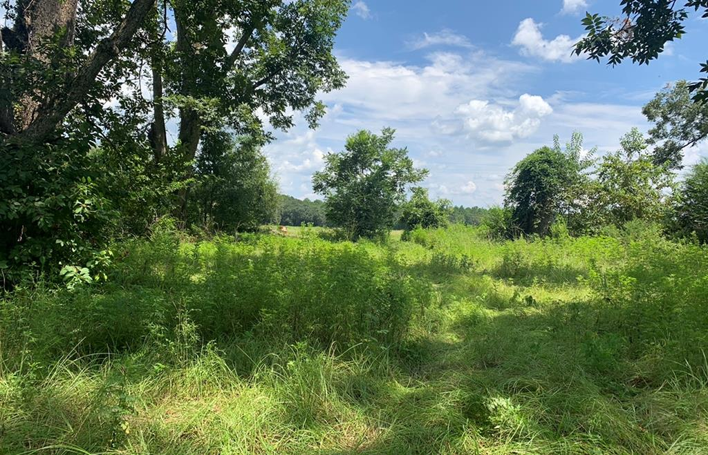 "Looking for the perfect Acreage site to build or Farm?!!?!? This long time family owned small acreage tract in Thomas County, is a Serene Beauty and they are HARD TO COME BY!! This property has a spring fed ""fishing hole"", which is a perfect spot to build a big pond, if desired.  The old house & barn areas have fallen in, & can either be used for old wood, or simply burned/removed. The site has a deep well from ""back in its day"", but no working well pump. Come on out! It's Beautiful!! For safety, call to make an appointment!!"
