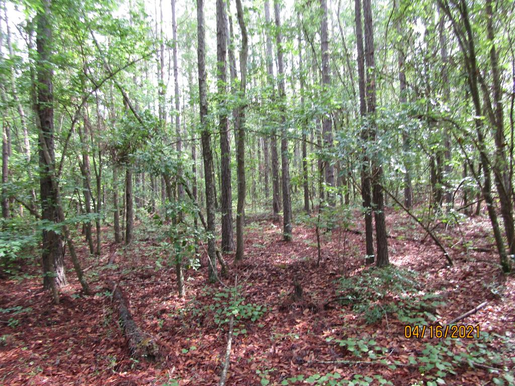 would make a great home site or hunting track, has pine and hardwoods on the property, small cabin that could be fixed.