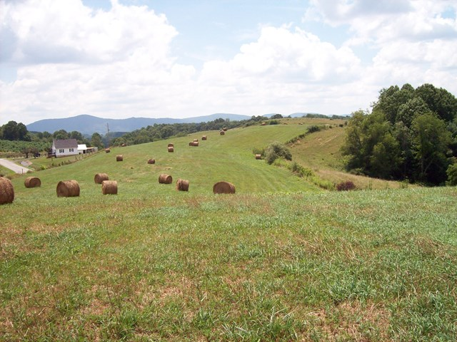116.52 ACRE FARM WITH ACCESSORY BUILDINGS. EXCELLENT FARM LAND, OR CAN BE EASILY SUBDIVIDED INTO A SUBDIVISION. CLOSE PROXIMITY TO THE TOWN OF INDEPENDENCE AND ONLY 15 MINUTES FROM THE CITY OF GALAX.  LONG ROAD FRONTAGE ON RIDING TRAIL ROAD.  MOSTLY GRAZING PASTURE THAT IS TILLABLE.  CAN BE DIVIDED INTO SMALLER TRACTS OFFERING MANY BUILDING SITES WITH SPECTACULAR VIEWS.