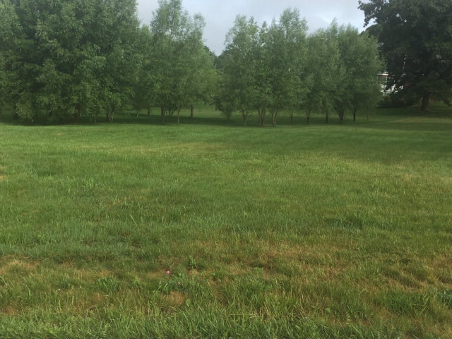 GREAT BUILDING LOT IN THE LORETTO SUBDIVISION IN WYTHEVILLE.  COME BUILD YOUR DREAM HOME TODAY.