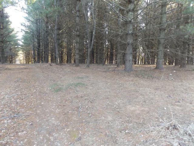 This 5.458 +/- acre tract features a good building site with seclusion, wildlife, possible views with the clearing of some trees and is close to Highway 52 and Interstate 77!