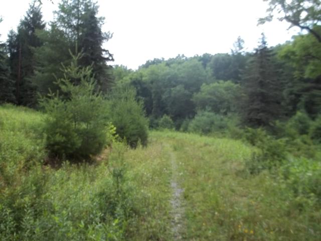 OFF Flint Hill Road, Piney Creek, NC 28663