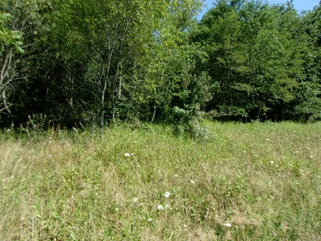 Round Mountain 93.955acres in the Elk Creek Valley.  1000 ft. of road frontage.  Springs.  Owner says timber value.  1 mile to the National Forest.  Building sites.  Private.  New survey..  Call today for more information.