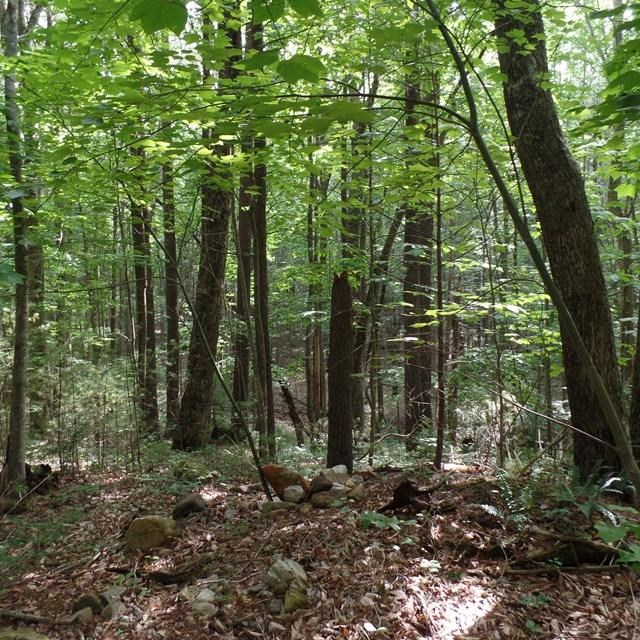 This lot in Konnarock is adjacent to the house (MLS 62035).  It can be purchased with MLS   62035 or separately.