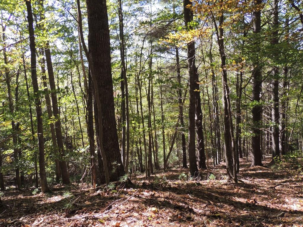 This tract consists of 3 parcels allowing the potential buyer to sell off one or more tracts. Nice building site with good views. Great property for hunting, abundant wildlife. There are many uses for this property, a small Christmas Tree farm or pumpkin patch. Call today for more details.