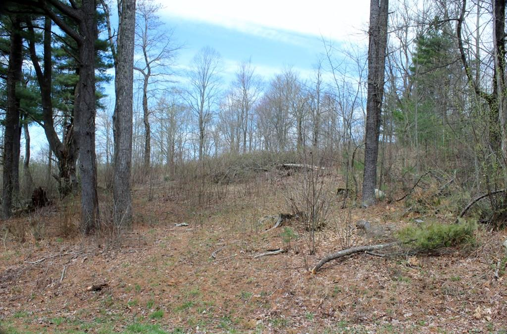 UNDER CONTRACT Just off the Blue Ridge Parkway, buildable & surveyed land on the 7th hole of Skyland Lakes Golf Resort.  Level land with a nice mixture of part wooded/part open w/nice views of the course. These lots are perfect for building your dream home. Golf the greens, enjoy the clubhouse, or lounge around the lakes. Only 3 miles to I-77 and Hwy. 52. Only 8 miles to the Blue Ridge Music Center, and 20 minutes to Mt. Airy, NC. The Golf Resort is right off of the Blue Ridge Parkway in the Blue Ridge Mountains. Near and easy to the Jefferson National Forest, the New River and the New River Trails. Conveniently located to nearby wineries, antique and art shops, eateries, the Galax Fiddlers Convention, and local campgrounds. Build your dreams with your first home, vacation home, or retirement nest here in the heart of the Blue Ridge Mountains. Land lays beautifully. Deer and turkey frequent this area due to the natural setting of woods, springs, ponds and Blue Ridge Parkway proximity.