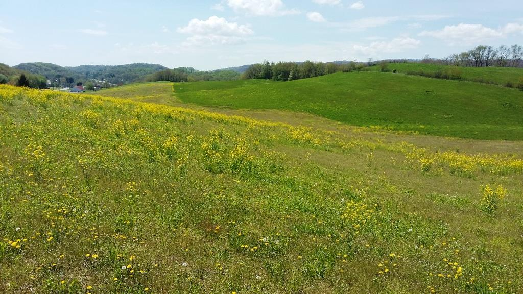 An open 52 acre tract ready to farm and build on with beautiful mountain views.  Plenty of paved road frontage for good access!  This property lays well with some crop land.
