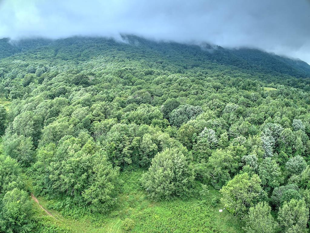 Rare opportunity to own a tract of land in the beautiful Thompson Valley section of Tazewell VA. This property is 2 tracts combined. Tract 1) Offers 14.91 acres tax map #147 01 0003D 027202 & Tract 2) offers 16.91 acres tax map# 147 01 0003C 012674 being sold together as a whole this land offers breath taking mountain views! Property is very private and is located off a gravel/dirt road by way of easement/right of way to get to property. One neighboring tract also has a right of way across the front part of the property to get to their property. This land is perfect for someone that wants to escape from the city and offers peace and quit and privacy. Would be perfect for hunting land or possible timber land or building your own cabin, tiny house or house on. All the land is wooded with the exception of a patch of clearing here and there. Buyer would need to have a perk test and install a septic and well if they wished to build upon land.