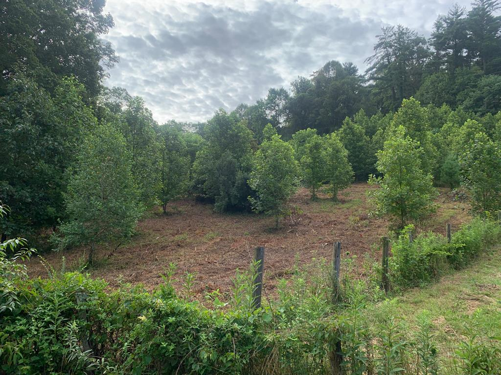 Attractive 10 acre lot just outside of Damascus. This property has multiple home sites and is conveniently located to down town Damascus, the Appalachian Trail, and the Virginia Creeper Trail.