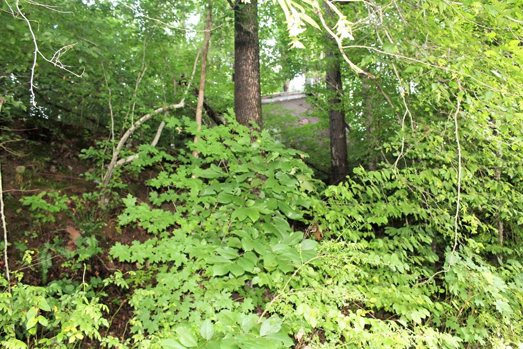 AFFORDABLE BUILDING SITE JUST ONE MINUTE FROM DOWNTOWN DAMASCUS. CLOSE TO THE VIRGINIA CREEPER TRAIL, APPALACHIAN TRAIL, STOCKED TROUT STREAMS AND MOUNT ROGERS NATIONAL PARK.  LOCATED ON QUIET LANE ACROSS FROM PASTURE. OLD DRIVEWAY IS OVERGROWN. TWO OLD HOUSE/SHED STRUCTURES ON THE PROPERTY THAT ARE INHABITABLE. BEAUTIFUL OLD OAK TREE AND NICE ELEVATED BUILDING SITE TO TAKE IN THE MOUNTAIN VIEWS. WELL BELOW TAX ASSESSMENT...PRICE IS FIRM. CALL OFFICE FOR DETAILS. .
