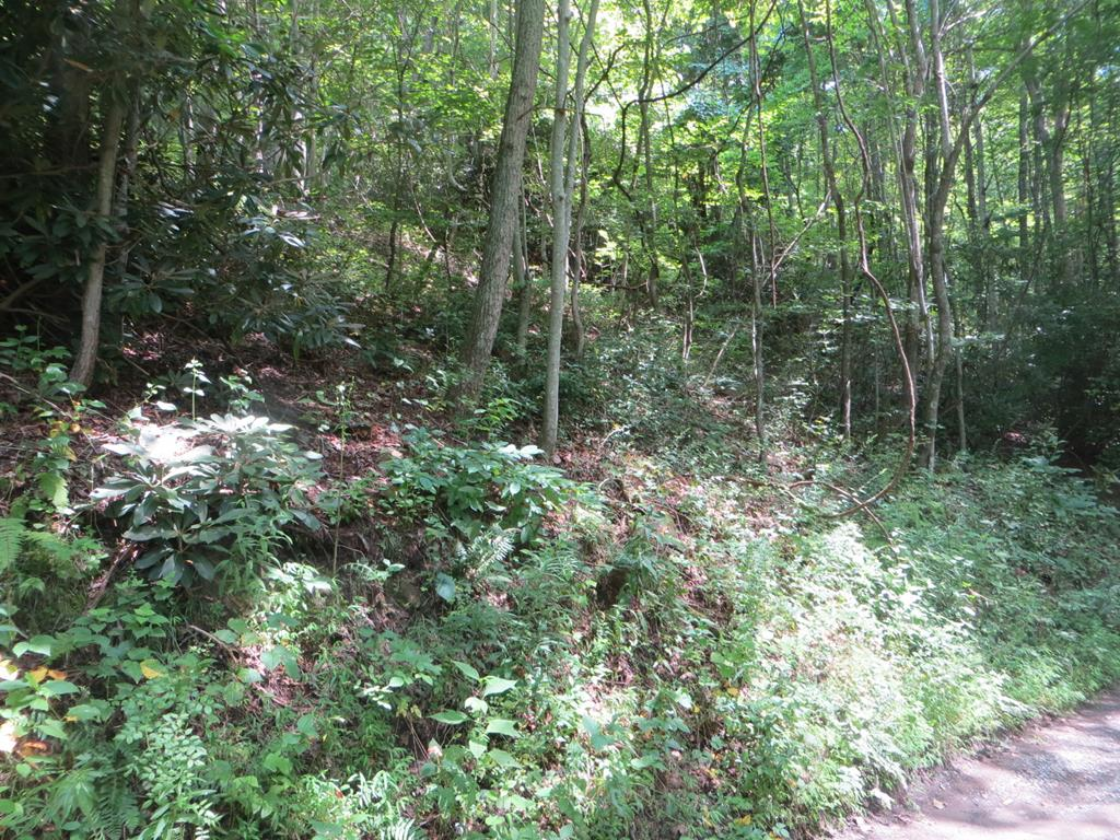 Small acreage tract near Damascus.  All mountain land.
