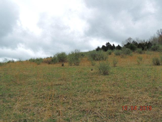 60+ ACRES OF UNIMPROVED LAND, WOODED AREA FOR HUNTING, ROLLING PASTURE TO FARM, FISHING POND AND SEVERAL GREAT HOME SITES TO BUILD YOUR DREAM HOME.
