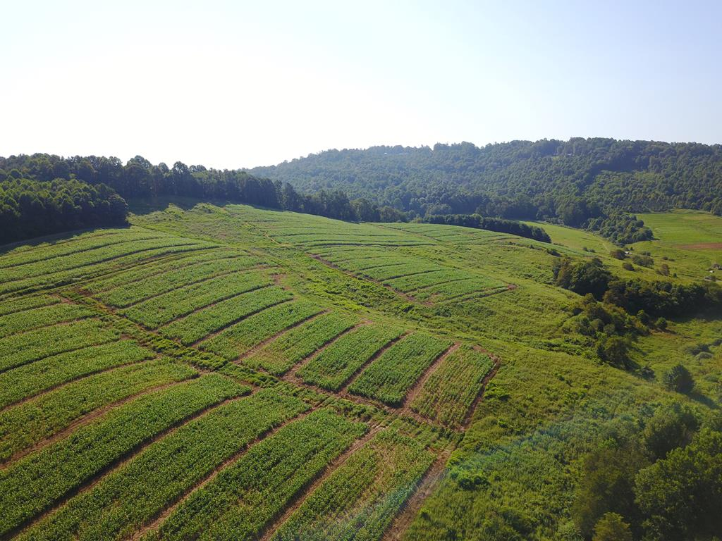 GREAT FARM LAND WITH A BOLD CREEK. 103 ACRES THAT COULD BE PASTURE AND IS PRESENTLY IN CROPS. LONG ROAD FRONTAGE AND JUST MINUTES FROM I-77.   THIS IS A GREAT FARM IN THE HEART OF CARROLL COUNTY