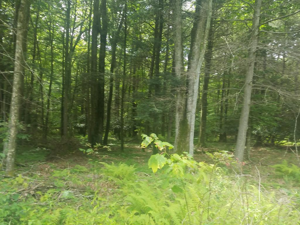 13.3 acres in the gateway to the to the Appalachian Trail, Virginia Creeper Trail Grayson Highlands State Park, Stocked Trout Fishing, Trophy Hunting, and beautiful mountain views! Unlimited possibilities for building your dream home