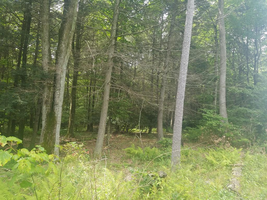 Opportunities abound on this 1.42 acres of land in the mountains of Smyth County Virginia . Beautiful mountain views with several building sites, wildlife, natural mountain laurel and dogwoods. Minutes  to the Grayson Highlands State Park, White Top Mountain and the Virginia Creeper Trail.