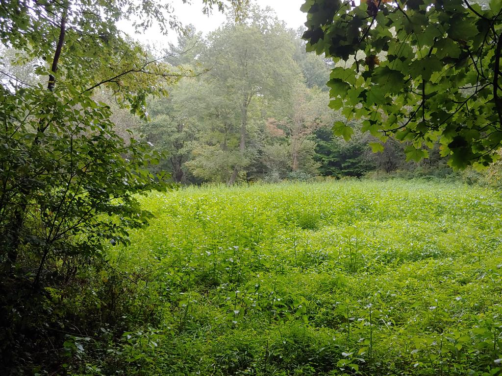 Recreational Property with an abundance of wildlife! A national forest with horse trails is within 2-3 miles of this property. Would be a great secluded home site as well.  Build your dream country home here in the mountains of Grayson County and have your own backwoods paradise.