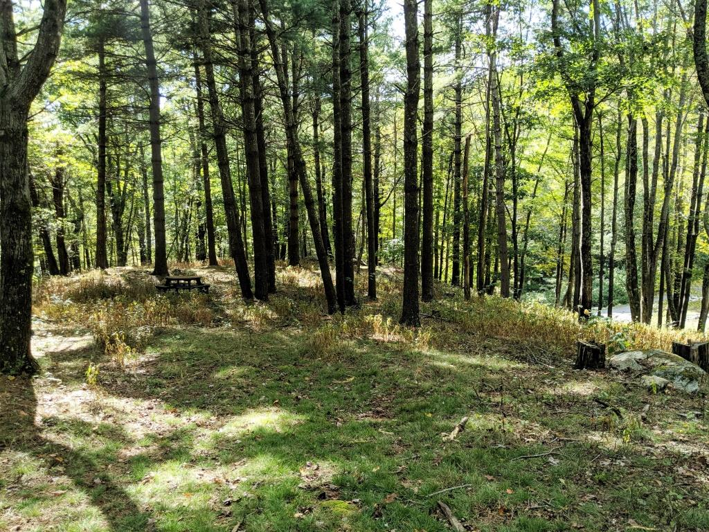 A beautiful 6.43 acre tract tucked away in a gated community in Grayson County, VA.  A park like setting throughout the Pine Mountain Estates and just minutes to the Town of Independence, VA.  Located within a short drive to Grayson Highlands, New River, Jefferson National Forest and all the  outdoor activities these places offer.  A perfect spot to build your cabin in the mountains and enjoy the wonderful mountains of Southwest Virginia.