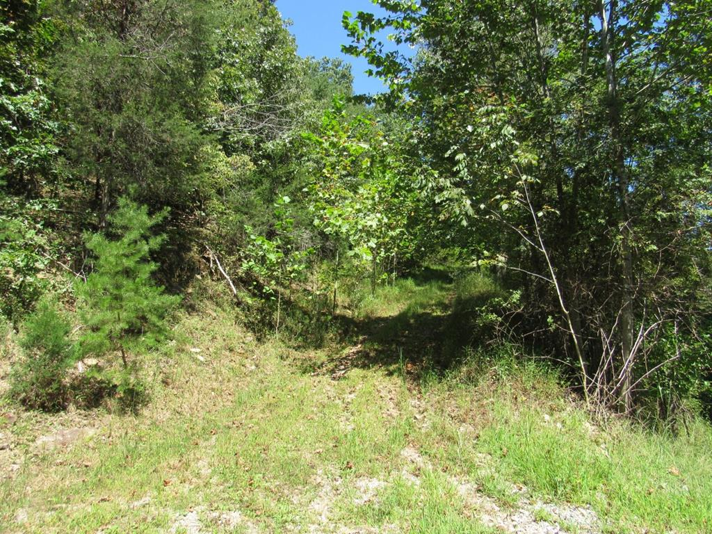 If youre looking to enjoy life near the river this may be the place you want to purchase.  This land provides access to the North Fork River by a common area on the River. This would give you the opportunity to interact in recreational activities such as floating, kayaking and fishing.   Containing 2.1+/- acres, this property would be perfect for building a primary residence or vacation home.  It is just a short distance to Abingdon, VA where you will find  great shopping, hospitals and schools.