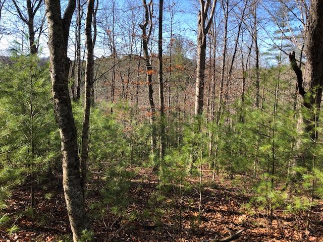 Close to the New River and public boat landing. Very private with nice building sites. This property is wooded but could have nice medium range view of the surrounding mountains. Priced below local tax assessment.