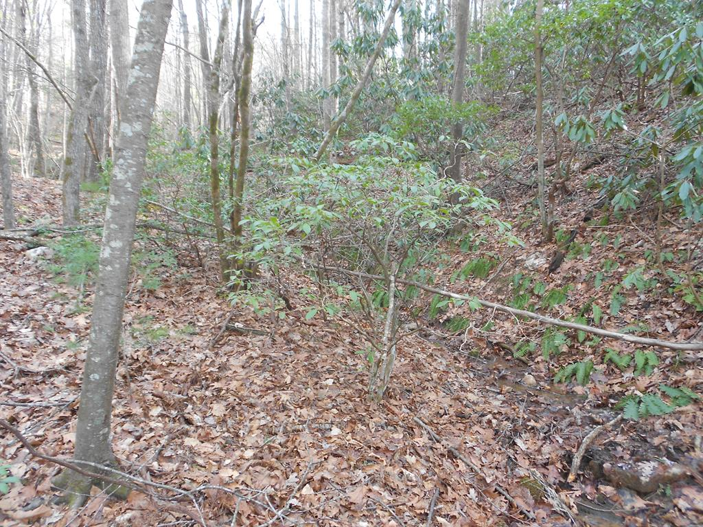 Owner may be willing to finance. Buildable wooded 7.7+/- Acres Land Lot on paved county road. No Restrictions. Manufactured homes OK. Mostly wooded, you can clear only the trees you want to clear and tuck your home/cabin under the canopy of the trees to be private and secluded. Suitable for all home styles including stick built, modular and doublewide. Lots of mature hard wood and pines. Only minutes from the Blue Ridge Parkway with private road for easy access off state maintained road. GREAT PRICE for buildable land.