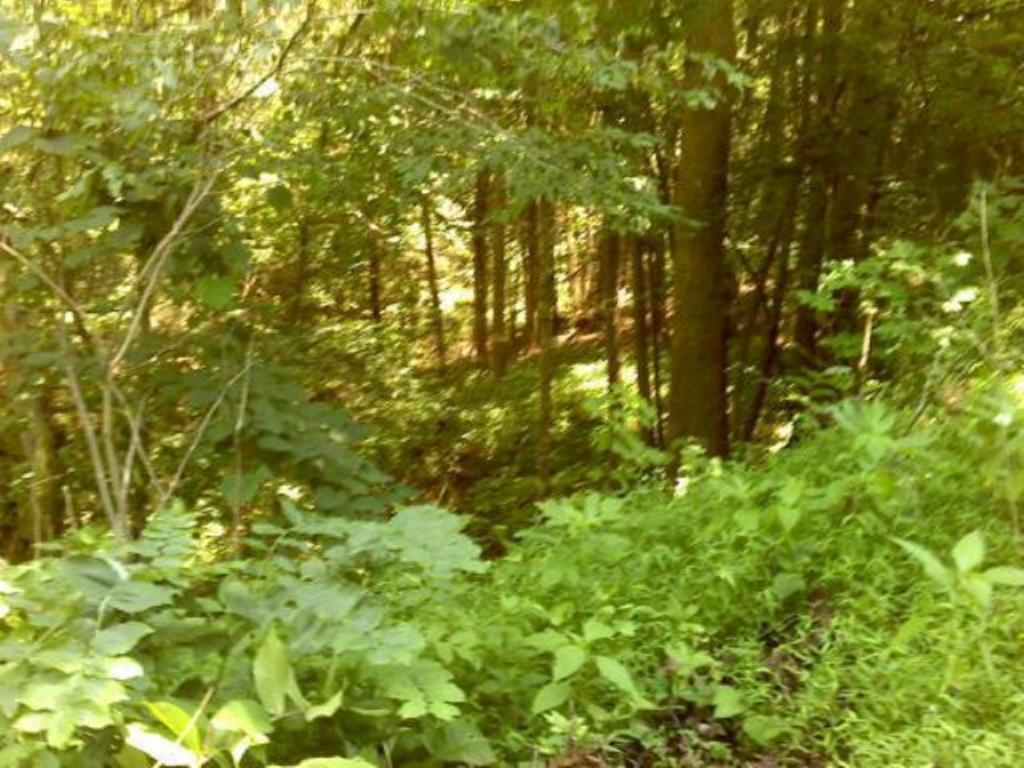 A wooded 2.5 +/- acre lot that would be an ideal place for your mountain home near the lake. Only minutes to South Holston Lake and 15 minutes to the historic town of Abingdon, VA. This land is rolling and sloping and has 2 wonderful building sites, just waiting for you. Enjoy the wooded wonderland, complete with a stream running through the property. This property has public water and electric available and sits on a county road. Come and build your dream home and enjoy the nearby lake, mountains and culture.