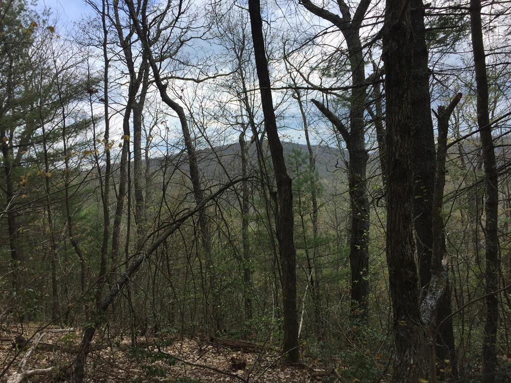 Hunters dream!! 9 acres of land bordering Jefferson National Forest on three sides and only minutes to Hales Lake! This land is as secluded as it gets!