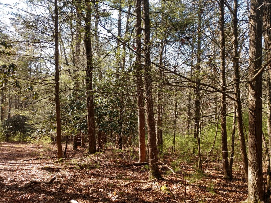 Seclusion, seclusion, seclusion! This property can be your hunter's paradise in Wythe county.  49+ wooded acres. Wildlife and trees.  Build your mountain home here.