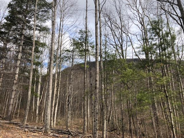 AEP lines on edge of acreage.  Elevations up to 2,500 ft.  Rolling topo, wildlife, young timber.  Build, hunt, hike, camp.  Paul's Creek roars through the valley.  County taxes estimated until more information comes in.