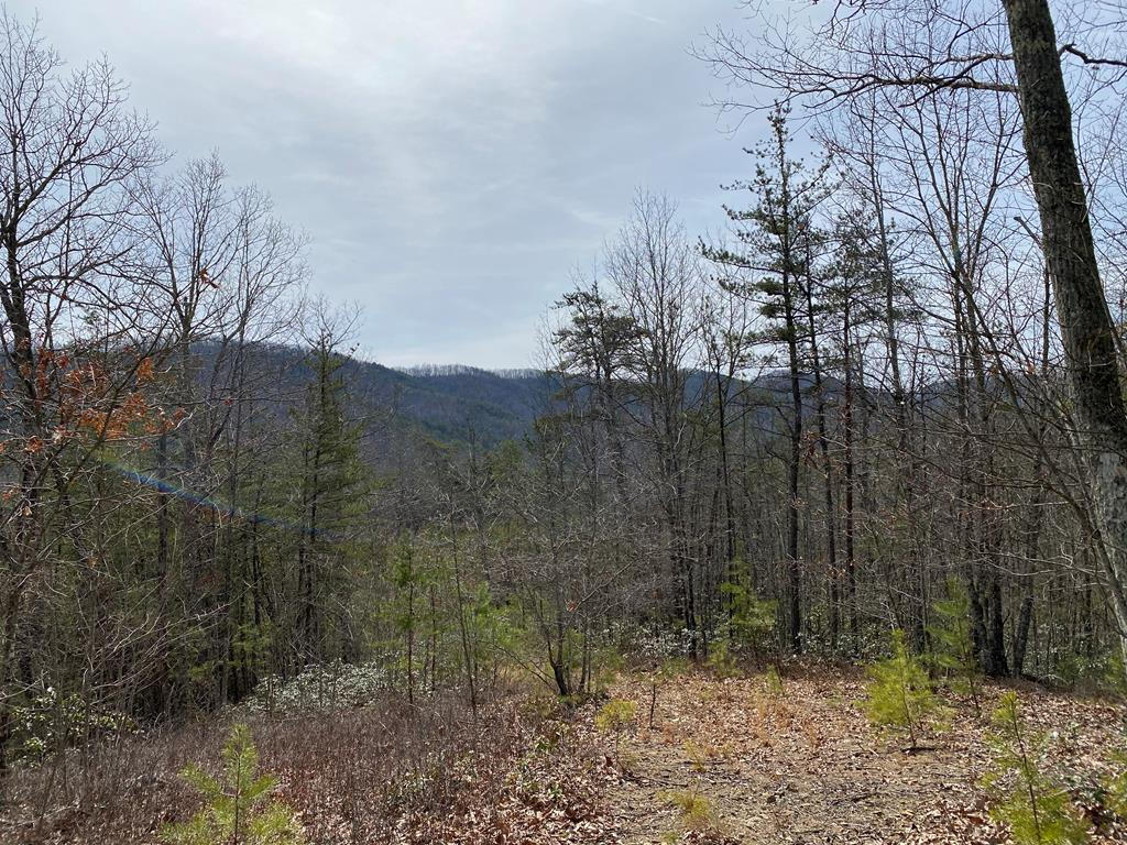 Wooded site with close access to I-77 exit. Great place for cabin or home. Property has road to nice plateau which is completely private with a nice mountain view in front. The property borders National Forest at the rear and on the right side. The Old Walker Mountain Road is in close walking distance providing a great hiking area or endless hunting.Taxes are only estimated.