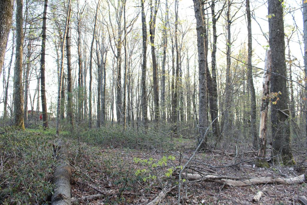 1.75 Acres of land located in Carroll County, Virginia (0 Trail Lane, Meadows of Dan, VA 24120) off Terry's Mill Road.All Wooded. Fronts on private graveled road (Trail Land). Land lays level. Good building site. No zoning. No Restrictions. 10 minutes to Meadows of Dan, Va and Blue Ridge Parkway. 10 Minutes to Old Mill Golf Course. 20 Minutes to Hillsville, VA and Interstate I-77. 30 minutes to Floyd, VA. 30 minutes to Mt. Airy, NC.