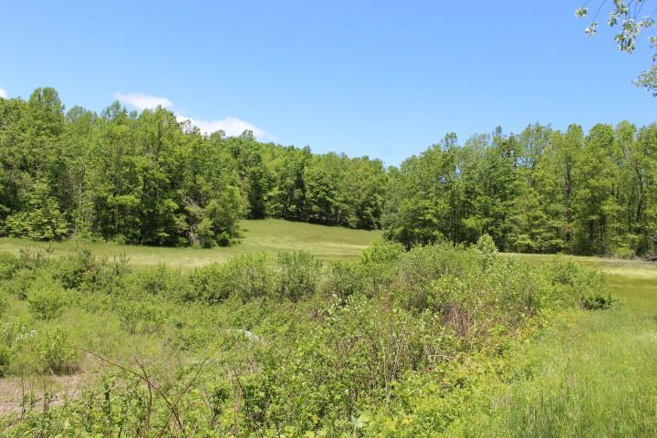 45.7 Ac of land for sell in Patrick County, Virginia (733 Red Rough Rd, Meadows of Dan, VA,24120). Land is rolling. Good Timber. Fronts on State Paved Road for approximately 500 ft. This property has it all - Views of the surrounding area, great building sites, road frontage, stream andabundant wildlife - hunting. Come to the country and enjoy nature and country life at its best.  Approximately 15 acres open and remainder wooded. Good timber. Fronts on state paved for approximately 500 ft. Views of surrounding area.  Stream running thru middle of property going thru pond area. Pond needs to be re-worked before bringing back to original size.  Abundant wildlife - hunting.  It has a fixer upper home on the property. Purchaser to decide if livable or not.  Conveniently located.  5 minutes to North Entrance to Primland Resort.  10 minutes to Meadows of Dan, VA and Blue Ridge Parkway.  35 minutes to Floyd, VA.  40 minutes to Mt. Airy, NC.