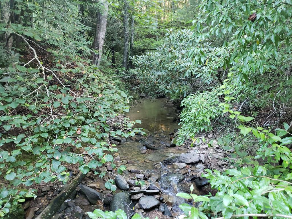 Great hunting tract! 22 private acres with abundant wildlife