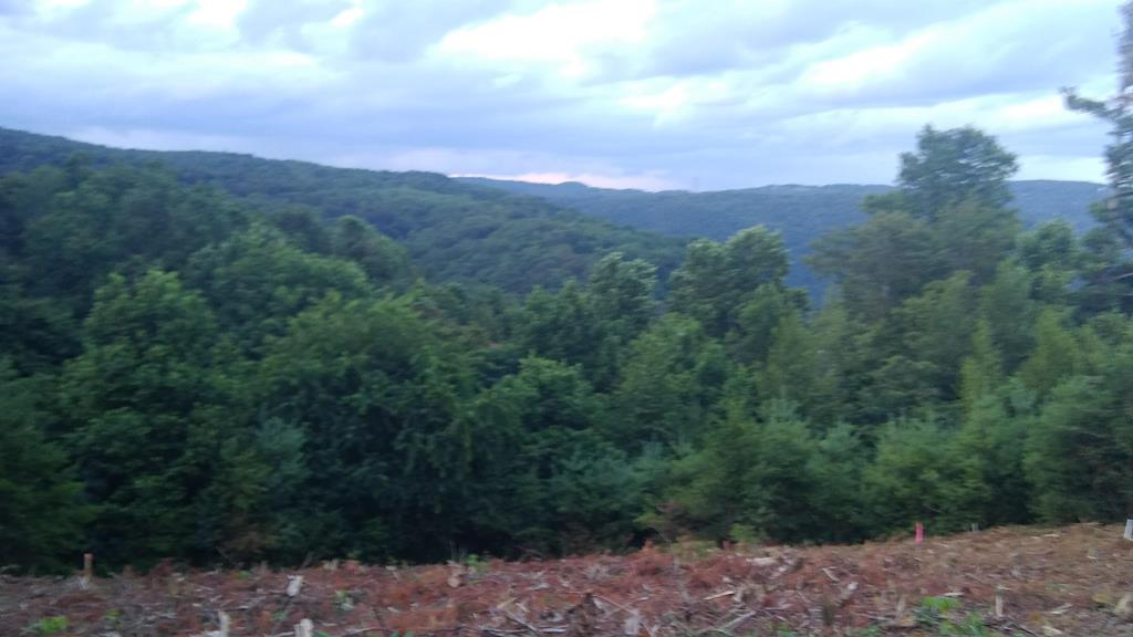 Excellent Blue Ridge / Piedmont views. This is an opportunity to build a mountain house with picturesque views. Property was recently partially cleared so one can see what lovely views there are. Located just off the Blue Ridge parkway in a hidden gem of a community that has community water and many amenities including pool, clubhouse, tennis & pickleball courts, shuffelboard court, horseshoes, a playground and fishing ponds. Own a golf cart? enjoy the several miles of paved roads to enjoy the sights and visit neighbors. Come see why we seem to have a small building boom in Chalet High. Only 6 ninutes to Fancy Gap, 25 minutes to Mt. Airy or Galax.This offering is for 2 lots offered together. It gives 200 foot road frontage. An adjoining third view lot is also available.