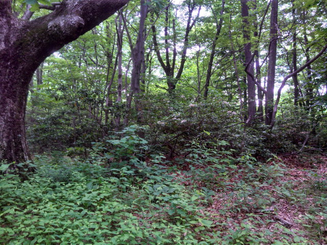 Life in the Blue Ridge Mountains could not get any better than this. 4.56 Acres With views. Great for camping or for that home you always wanted. Has been perked.Four wheel drive recommended, washout on the drive in.