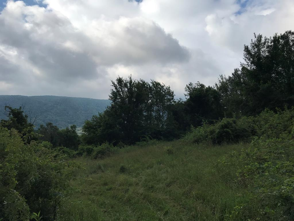 Rare opportunity to own a tract of land in the beautiful Thompson Valley section of Tazewell VA. This property is 2 tracts combined. Tract 1) Offers 14.91 acres tax map #147 01 0003D 027202 & Tract 2) offers 16.91 acres tax map# 147 01 0003C 012674 being sold together as a whole this land offers breath taking mountain views! Property is very private and is located off a gravel/dirt road by way of easement/right of way to get to property. One neighboring tract also has a right of way across the front part of the property to get to their property. This land is perfect for someone that wants to escape from the city and offers peace and quit and privacy. Would be perfect for hunting land or possible timber land or building your own cabin, tiny house or house on. All the land is wooded with the exception of a patch of clearing here and there. Buyer would need to have a perk test and install a septic and well if they wished to build upon land. All information has been taken from tax records