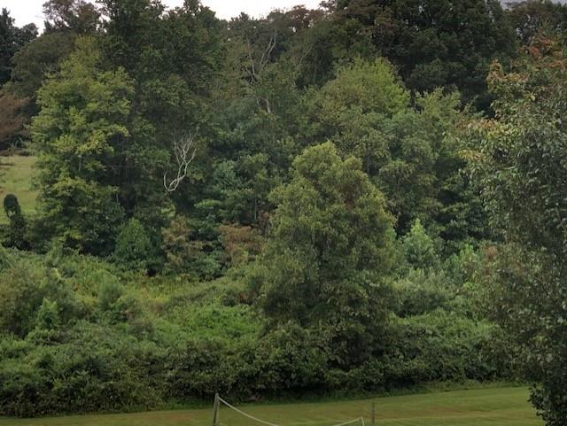 1.78 ACRES SINGLE FAMILY LOT. GREAT LOT TO BUILD YOUR DREAM HOME!!