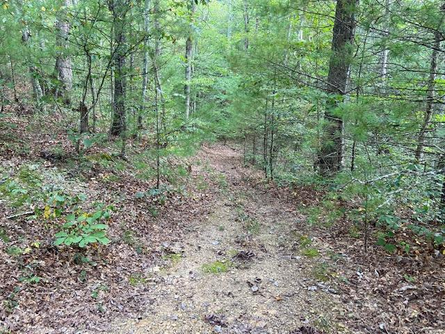 Location Location!  Convenient but secluded is what you have with this 61.13 ac parcel joining Jefferson National Forest.  Property has trails through it for walking or riding atv's or horses and has a creek.  Before buying another, take a look at this one if you love to hunt and want a great recreational property.