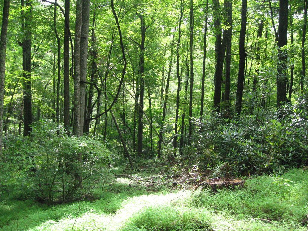 Nice wooded building lot in Cascade Mountain Resort, a gated community. Cascade has a swimming pool, tennis courts, fish lake, club house and play ground for the kids.The owner says there is a partial Piedmont view if a two story home is built. Lot does have a HOA yearly fee. Prefect for your new cabin in the mountains. Just off the Blue Ridge Parkway.