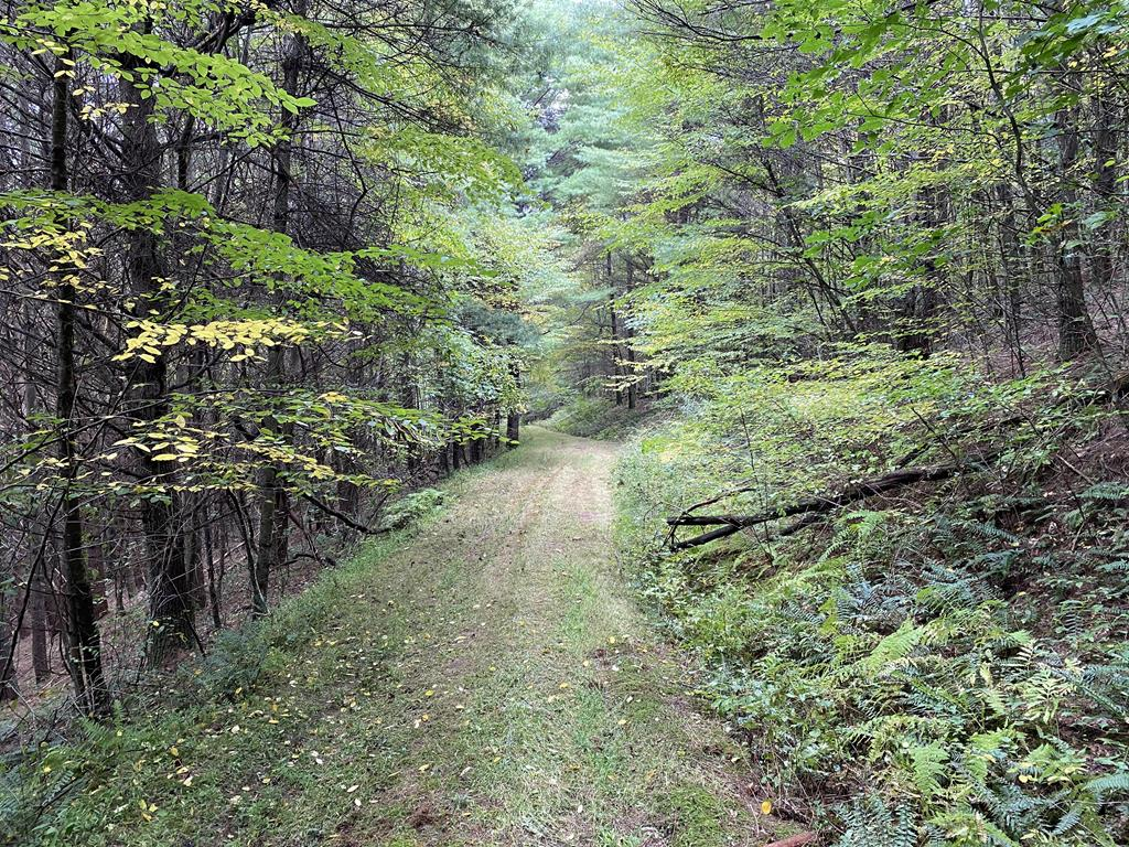 Come enjoy this large wooded property just outside the Hillsville city limits. The property features approximately 850 ft of road frontage on Highway 52. Multiple creeks & streams cut through and around the parcel. Full of timber & wildlife with multiple trails for miles of off-road riding & hiking. Multiple flat building sites connected by old logging roads. Hunting opportunities abound in the mostly rolling, sometimes steep topography.  This property would make a fantastic home site, recreational property, or investment.